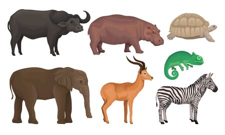 African Area Habitants Drawn In Realistic Manner Vector Illustrations. Isolated On White Background Animal Set