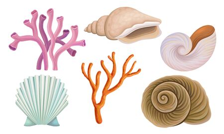 Bright Tropical Shells And Corals Vector Illustrations Set Ilustração