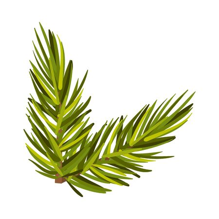 Lively green spruce twig. Christmas tree branch, New Year holiday, winter concept. Vector illustrations, isolated on white background.
