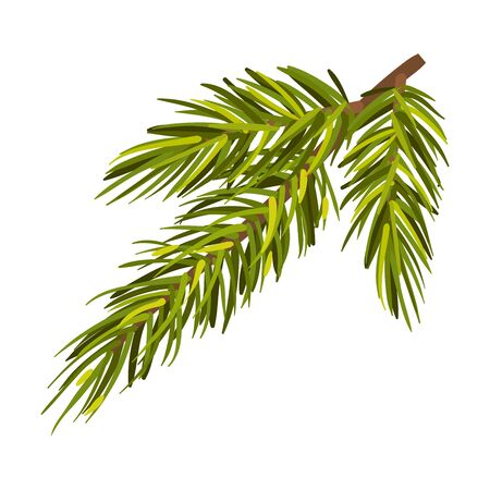 Lush green spruce twig. Christmas tree branch, New Year holiday, winter concept. Vector illustrations, isolated on white background. Çizim