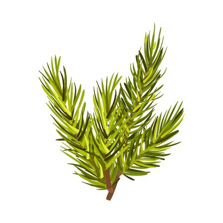 Beautiful Green Spruce Twig Vector Illustration Isolated On White Background