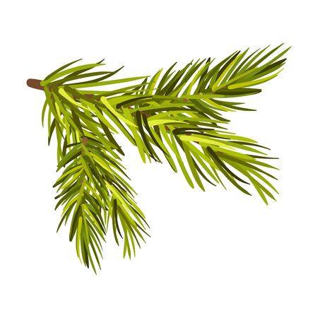 Green Spruce Twig From Left To Right Side Vector Illustration Isolated Çizim