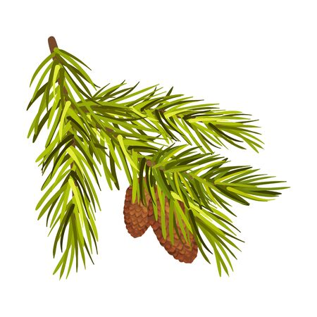 Green Spruce Twig With Two Cones Vector Illustration Isolated On White Background