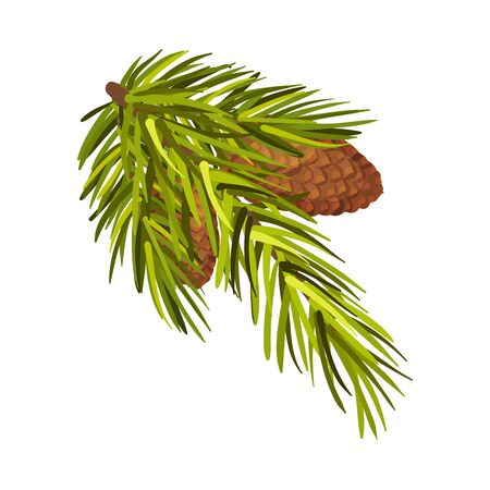 Green Spruce Branch With Two Cones Hidden Inside Vector Illustration