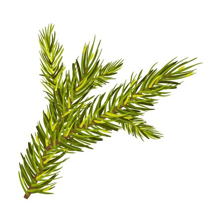 Green Spruce Branch Vector Illustration Isolated On White Background Stok Fotoğraf - 131732833