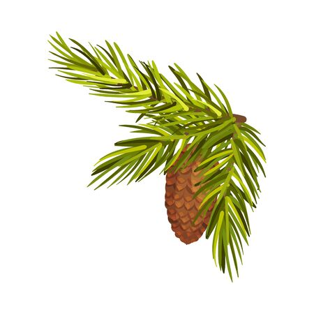 Green Bushy Spruce Twig With Cone Vector Illustration Isolated On White Background  イラスト・ベクター素材