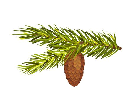 Green Spruce Twig With Big Cone Vector Illustration Isolated On White Background Çizim