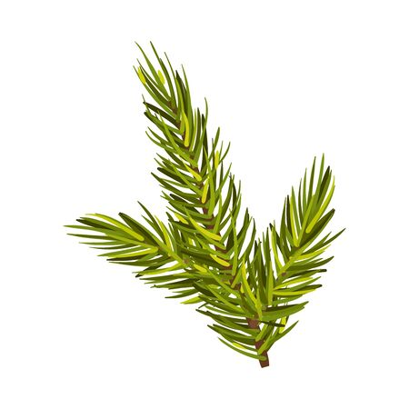 Part Of Green Spruce With Three Twigs Up Vector Illustration