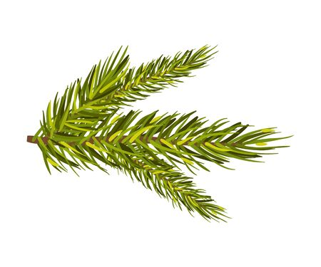 Green spruce twig. Christmas tree branch, New Year holiday, winter concept. Vector illustrations, isolated on white background, copy space Banco de Imagens - 131749806