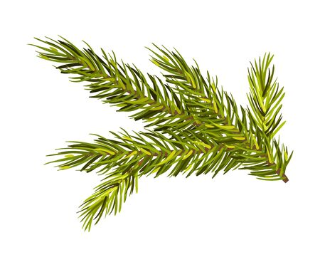 Green spruce twig. Christmas tree branch, New Year holiday, winter concept. Vector illustrations, isolated on white background. Banco de Imagens - 131751895