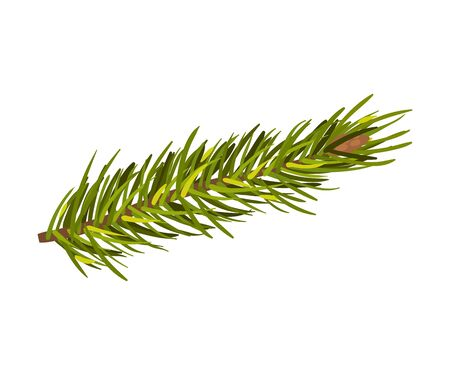 Green spruce twig with cone on the end. Christmas tree branch, New Year holiday, winter concept. Vector illustrations, isolated on white background. Ilustracja