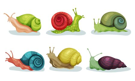 Lovely Snails Crawling In Different Directions Vector Illustrations. Small Cute Animals With Slow Movements Concept