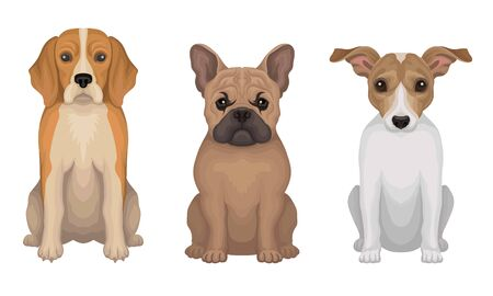 Purebred Detailed Drawn Dogs Vector Illustrated Set