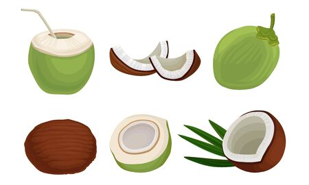 Exotic Coconut Fruit. Fresh Cocktail Ingredient Vector Illustrations