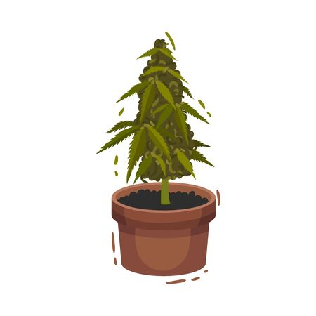 Cannabis Plant Growing In Pot Vector Illustrated Object. Drug Cultivation Concept
