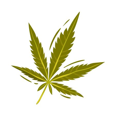 Cannabis Detailed Leaf Vector Illustrated Object Isolated On White Background. Drug Cultivation Concept
