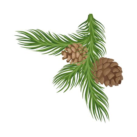 Spruce green lush branch with two small brown cones. Vector illustration.