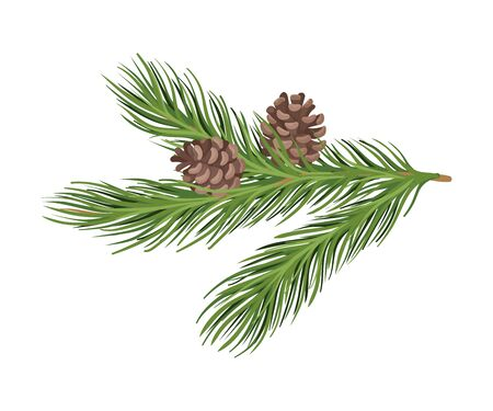 Lush green spruce branch with two brown cones. Vector illustration.