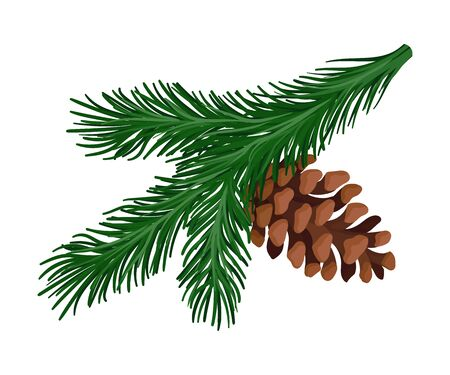 Bright green lush spruce branch with a brown cone. Vector illustration.  イラスト・ベクター素材