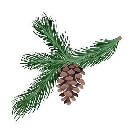 Branch of spruce with thick needles and a brown open cone. Vector illustration. Standard-Bild - 132298647