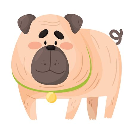 Cute fat pug. Vector illustration on a white background.
