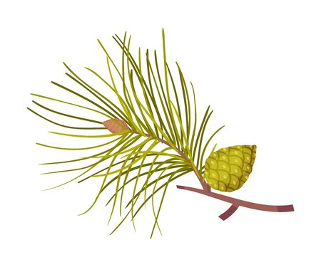 Pine branch with rare long needles and a green bump. Vector illustration on a white background.