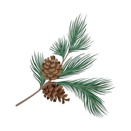 Pine branch with rare needles and cones. Vector illustration. Standard-Bild - 132403317