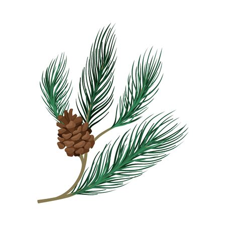 Thin young green pine branch with a brown lump. Vector illustration. Standard-Bild - 132303905