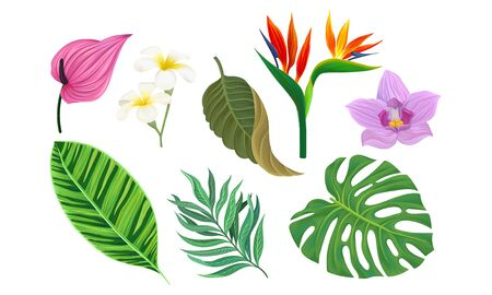Tropical Plants Vector Illustrated Set. Different Exotic Flora  イラスト・ベクター素材