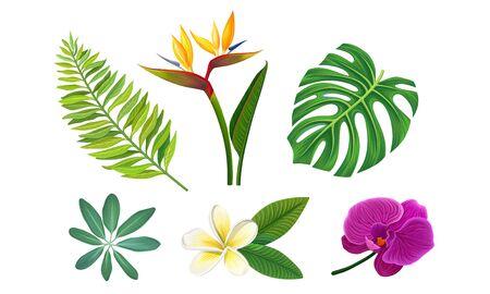 Tropical Plants Vector Illustrated Set. Different Exotic Flora Иллюстрация