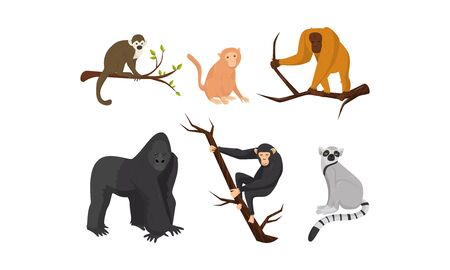 Different Species of Monkeys Sitting on Tree Branches Vector Set. Zoo Animal Collection Illustration