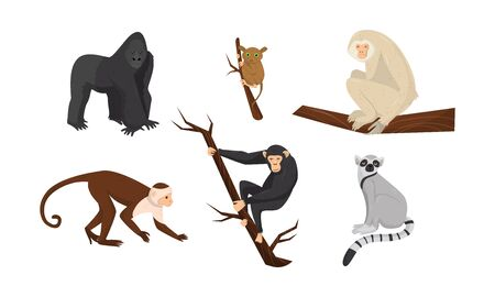 Different Species of Monkeys Sitting on Tree Branches Vector Set Illustration