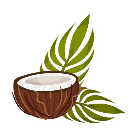 Coconut Half Piece with Leaves Isolated On White Background Vector Illustration