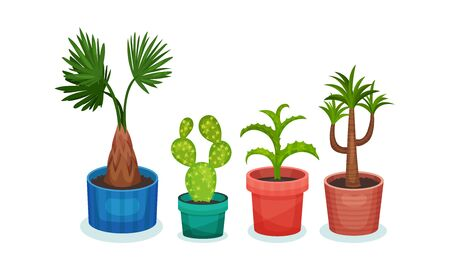 Set of exotic plants in flower pots. Vector illustration on a white background.
