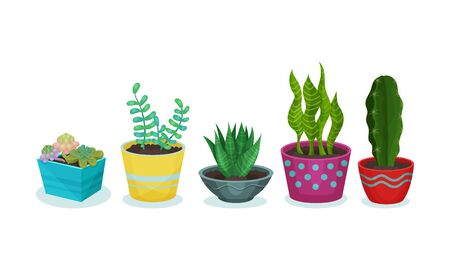 Different green plants in flower pots. Vector illustration on a white background.
