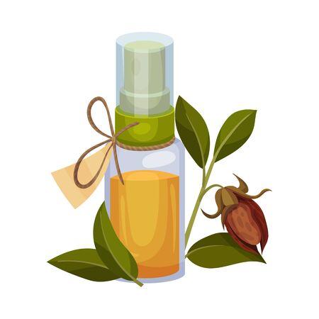 Jojoba Oil Bottle with Label and Jojoba Branch Next to It Vector Illustration Vecteurs