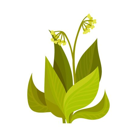 Field yellow flower. Vector illustration on a white background.