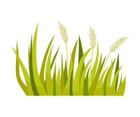 Green grass with spikelets. Vector illustration on a white background. Иллюстрация