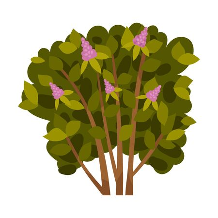 Lilac bush. Vector illustration on a white background.