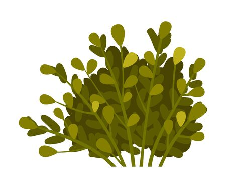 Bush with dark green branches and teardrop shaped leaves. Vector illustration on a white background.