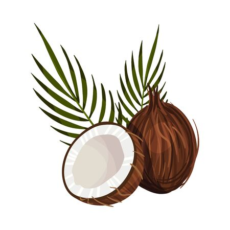 Half and Full Coconut Fruit with Leaves Isolated On White Background Vector Illustration