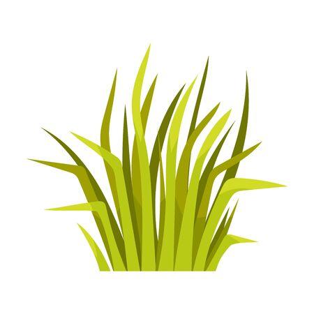 Manojo de hierba con hojas largas y delgadas. Ilustración de vector sobre fondo blanco.
