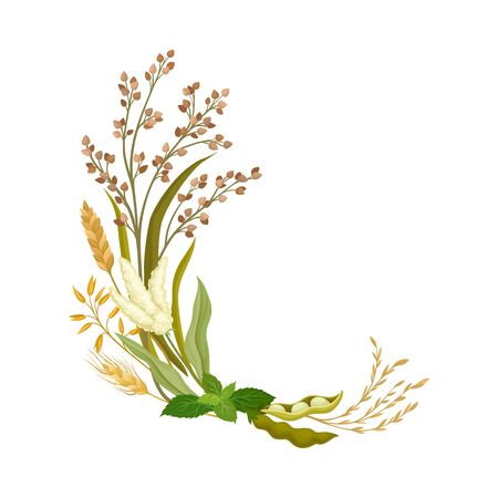 Curved composition angular compositions from different ears, buckwheat, peppermint, peas and leaves. Vector illustration. Standard-Bild - 133066511
