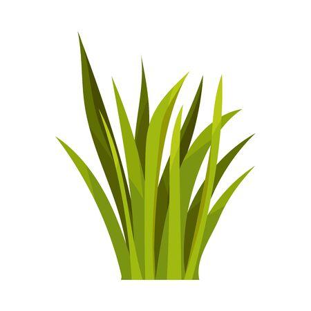 Buisson d'herbe longue verte luxuriante. Illustration vectorielle sur fond blanc.