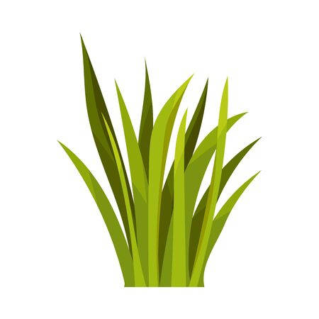 Bush de exuberante hierba larga verde. Ilustración de vector sobre fondo blanco.