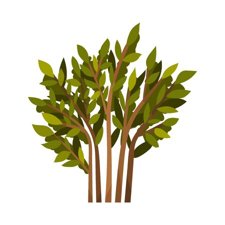 Lush bush with brown branches and green leaves. Vector illustration on a white background.
