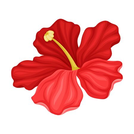 Hibiscus Detailed Flower in Full Bloom Vector Illustration. Decorative Exotic Botany Concept. Close Up View