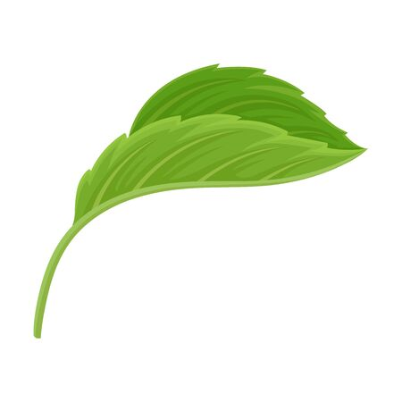 Side Viewed Detailed Green Hibiscus Leaf Vector Illustrated Element Isolated On White Background