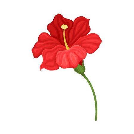 Hibiscus Detailed Flower in Full Bloom Vector Illustration
