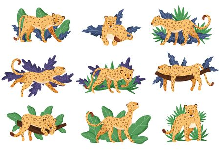 Spotted Leopard and Tropical Greenery Vector Illustrations Set 일러스트